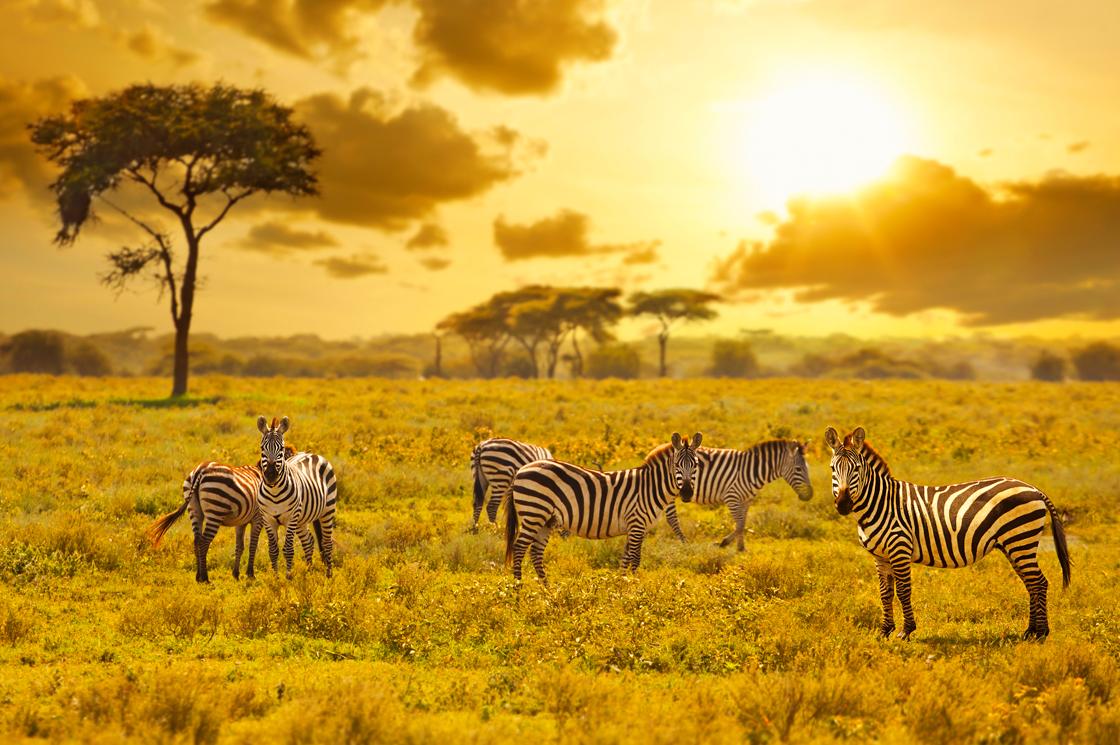 chamäleon reisen südafrika erfahrungen
